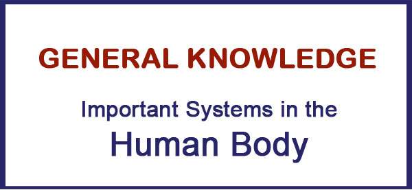 Important Systems in the Human Body