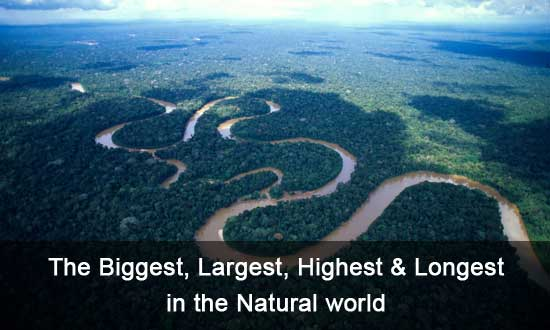 The Biggest, Largest, Highest & Longest in the world