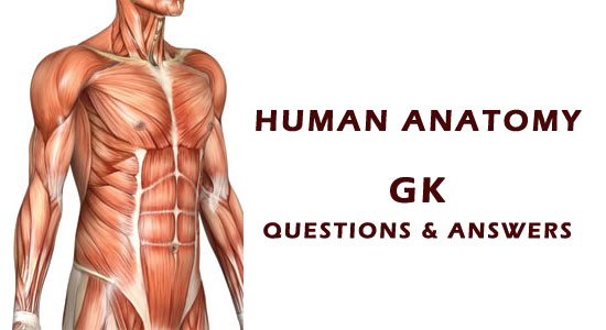 human-anatomy-gk-questions-answers