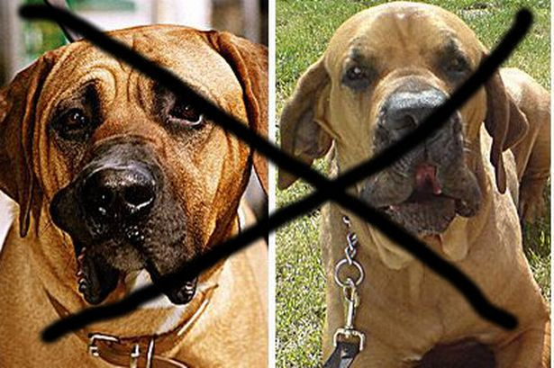 Government bans imports of dogs