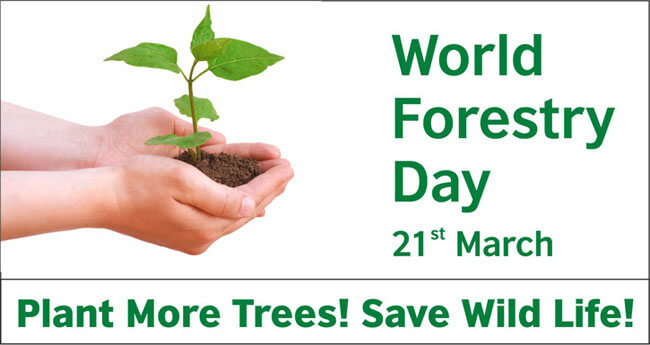 world forest day march 21