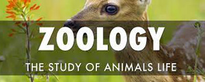 Zoology GK Questions